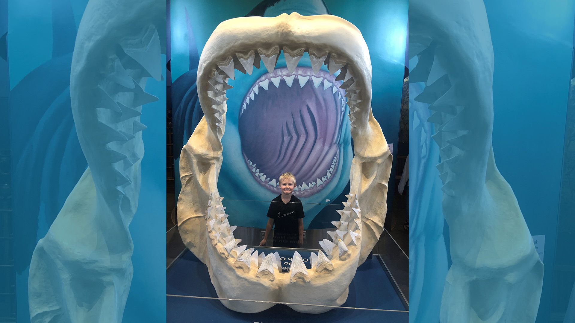 Oregon-Coast-Aquarium-Megalodon Jaws-1920x1080