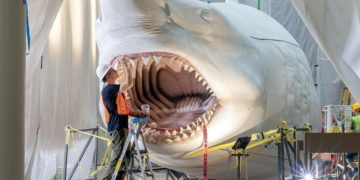Life-Size Megalodon being completed for display at the National Museum of Natural History