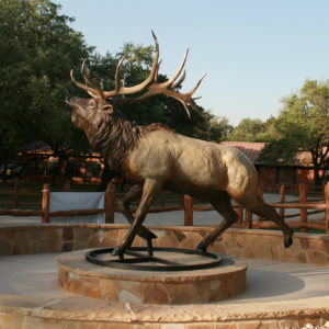 heroic elk featured in round a bout walk way